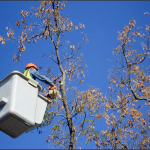 Bucket Truck Tree Trimmer